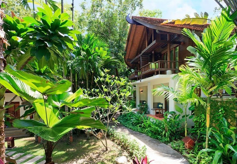 tree plant Resort property botany rainforest Jungle tropics arecales eco hotel Garden flower Villa backyard plantation botanical garden palm shade
