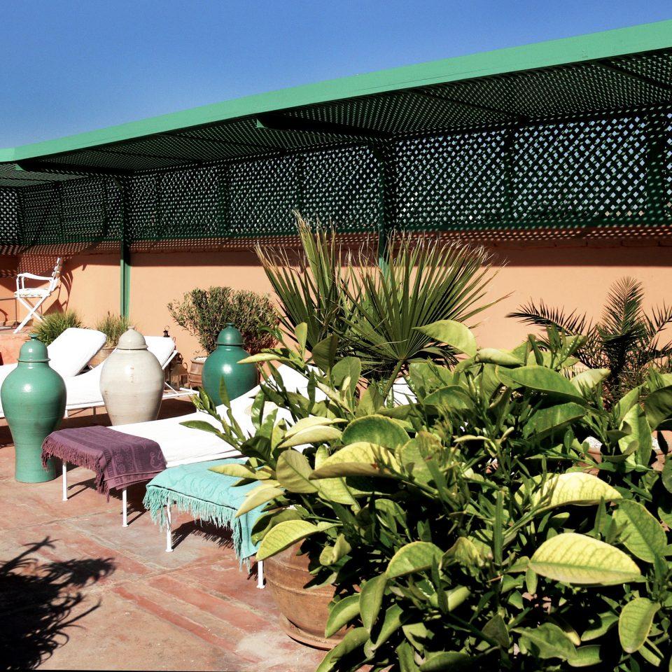 plant building Resort backyard green Garden Villa yard hacienda Jungle outdoor structure
