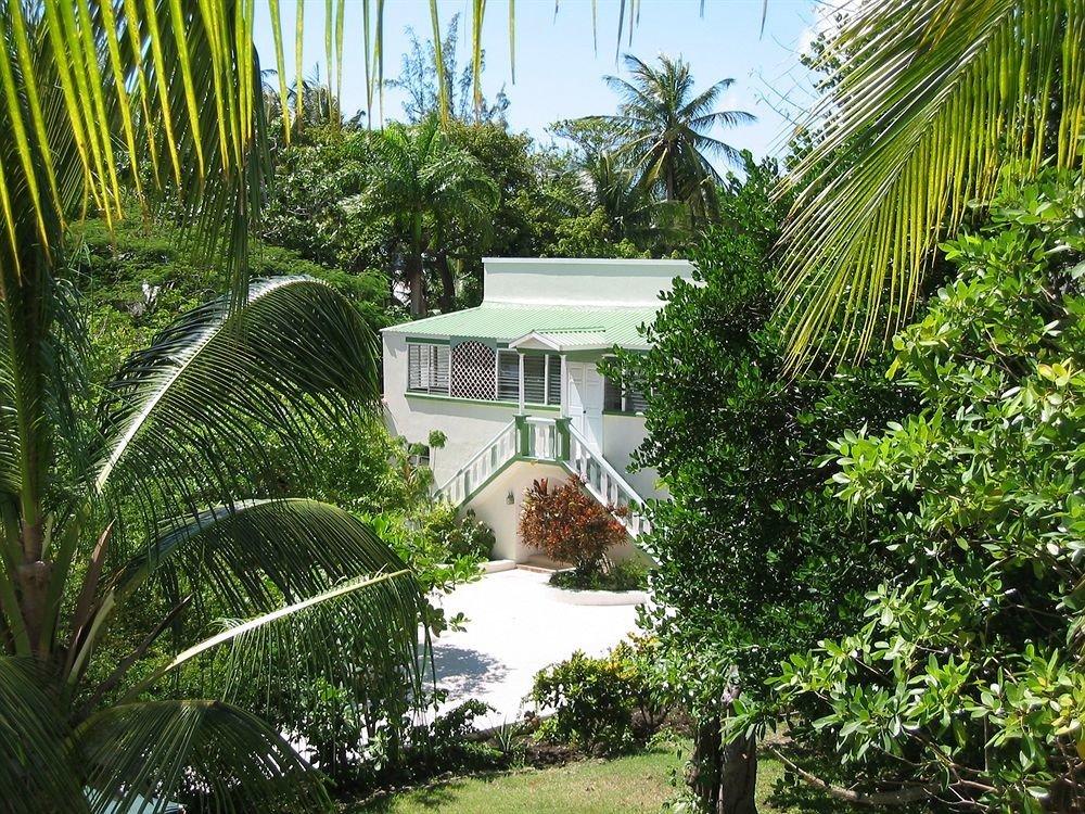 tree plant palm property Resort botany house arecales Garden Villa Jungle home tropics plantation cottage backyard eco hotel rainforest bushes surrounded lush