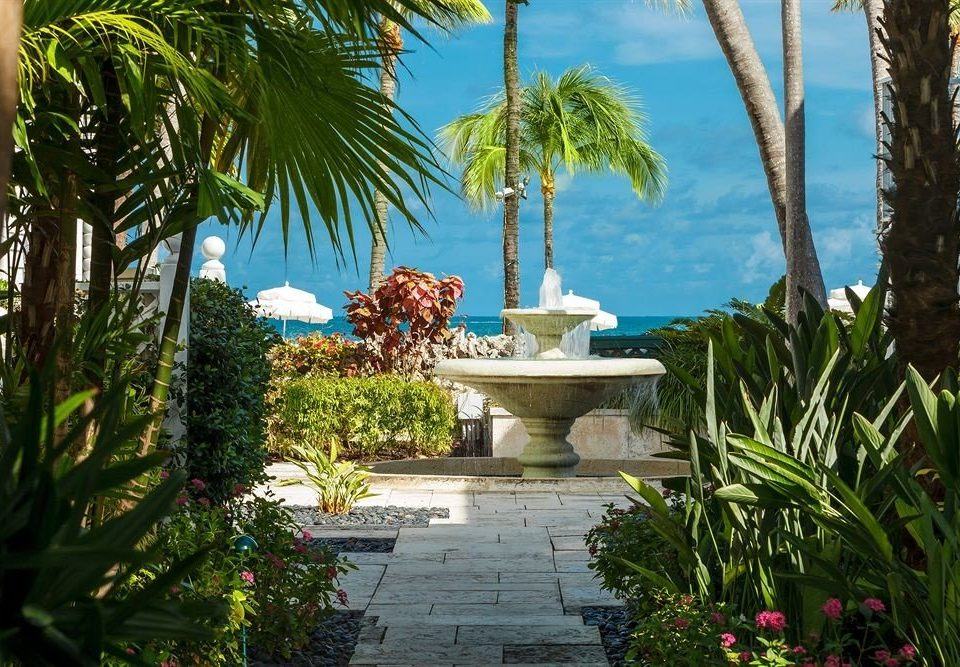 tree plant palm Resort swimming pool botany arecales Garden tropics palm family Villa backyard flower Jungle caribbean bushes shade surrounded