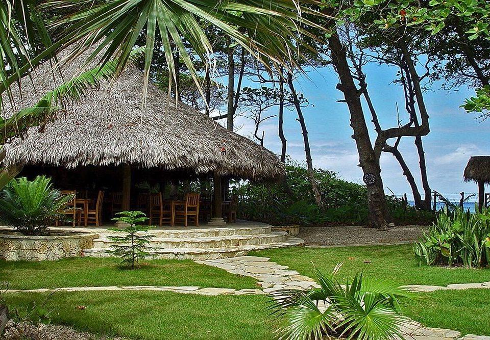 grass tree plant Resort botany house arecales Jungle rural area tropics Garden hut Village lawn flower conifer palm shade