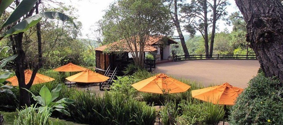 tree ecosystem backyard Resort plant Jungle cottage Village Garden yard shade