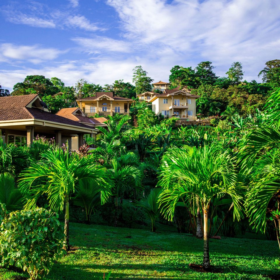tree botany Resort green arecales Garden tropics plantation rural area plant Jungle flower Village lush