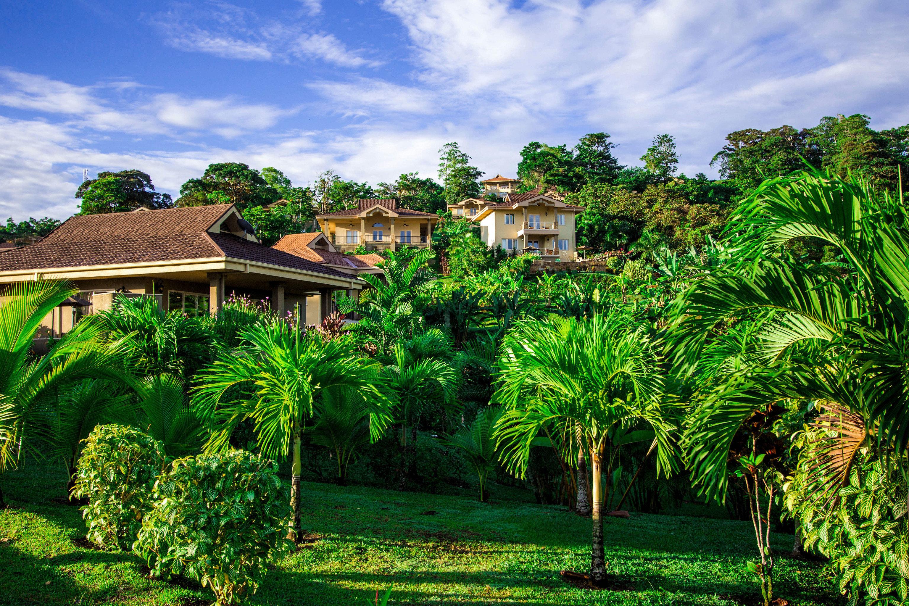 tree botany Resort green arecales Garden tropics plantation rural area plant Jungle flower Village lush