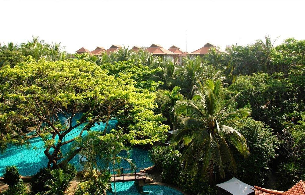 tree vegetation plant ecosystem Resort rainforest Jungle tropics Garden flower botanical garden bushes plantation Village