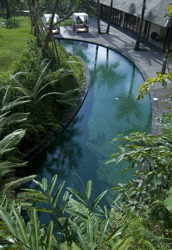 tree habitat vegetation green watercourse botany pond rainforest Jungle Garden River stream flower tropics plant waterway fish pond water feature