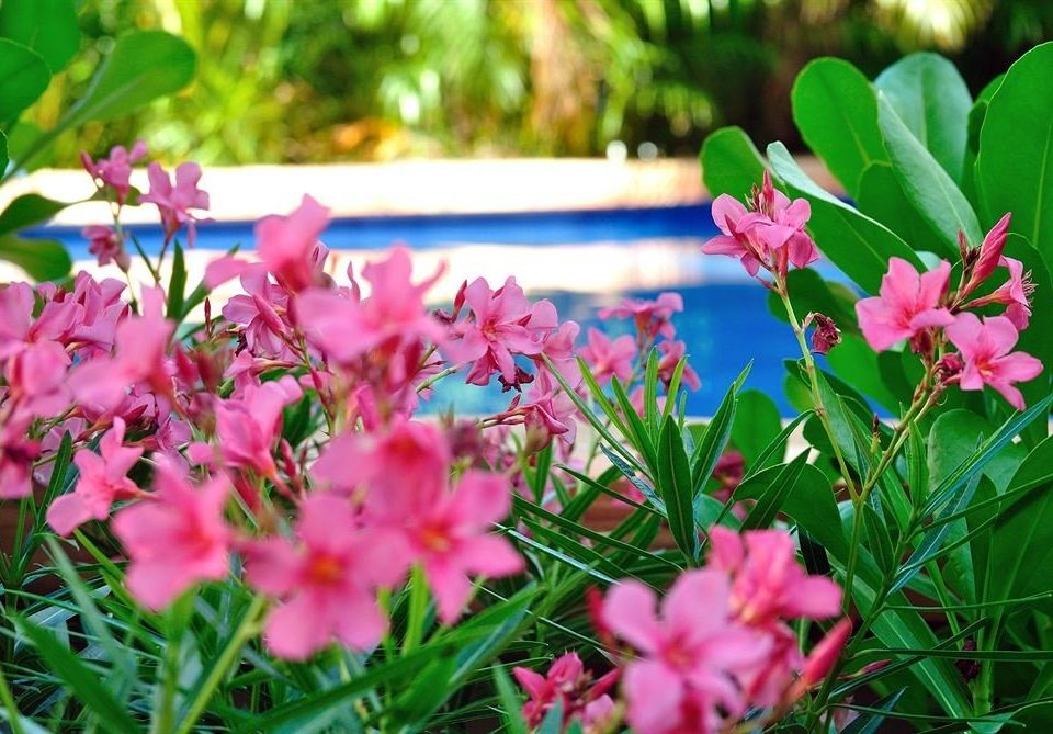 Garden Lounge Luxury Modern Pool Tropical plant flower Nature flora botany grass blossom land plant woody plant petal flowering plant leaf shrub lawn wildflower pink meadow colorful colored
