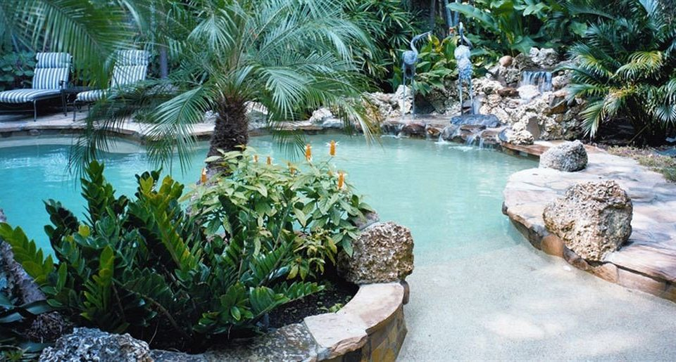 Lounge Luxury Pool tree swimming pool Resort plant arecales pond Garden backyard water feature surrounded