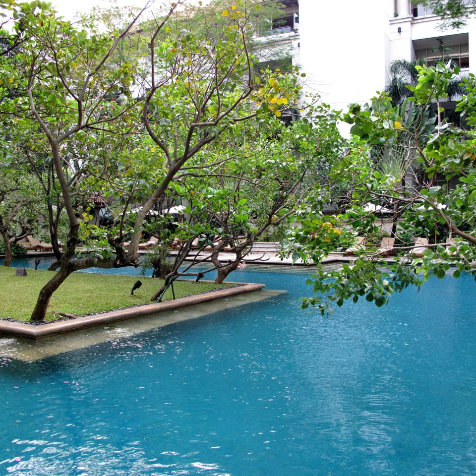 Lounge Luxury Pool tree water swimming pool flower waterway park Garden swimming