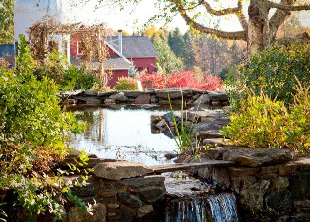 tree pond Nature backyard cottage Garden home water feature old stone surrounded