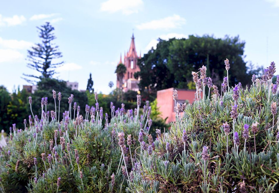 sky tree Nature flower plant flora lavender ecosystem botany grass lupin Garden meadow prairie land plant wildflower woodland english lavender flowering plant blossom surrounded lush