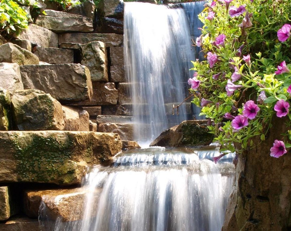Waterfall Nature water flower water feature watercourse botany Garden autumn surrounded stone