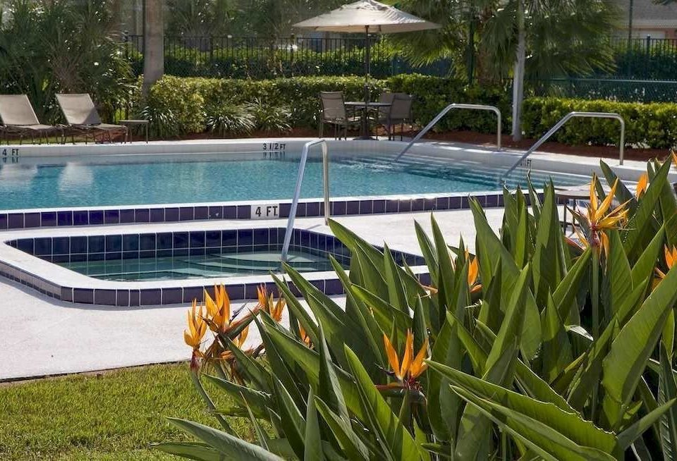 Patio Pool grass tree swimming pool leisure plant green backyard Garden lawn colorful vegetable