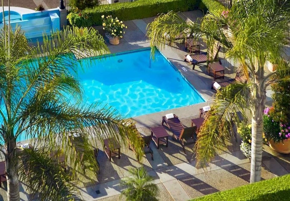 tree plant swimming pool property leisure Resort palm Villa backyard Pool condominium colorful lined Garden