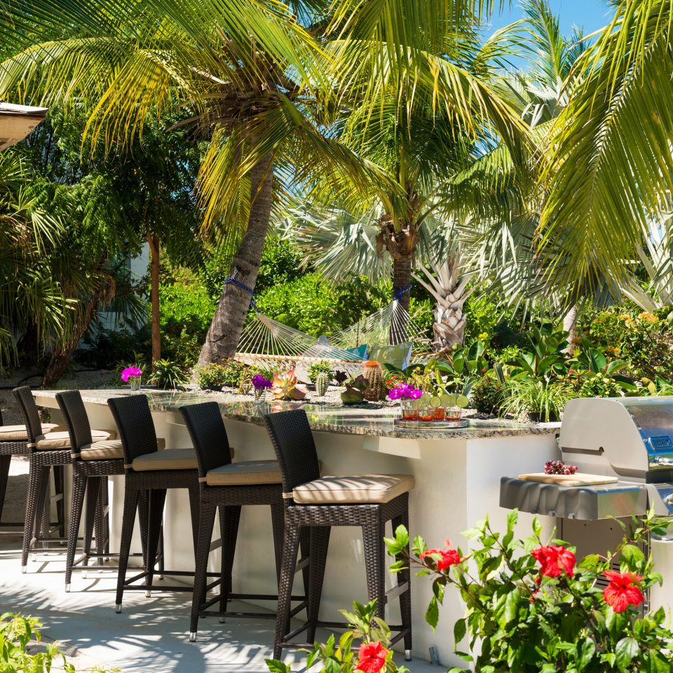 tree botany Resort flower floristry restaurant Garden palm plant backyard arecales lined surrounded