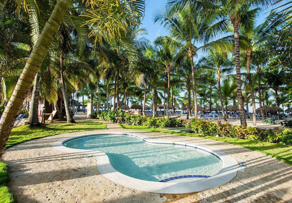 tree grass swimming pool Resort plant walkway arecales Garden palm family backyard tropics botanical garden palm