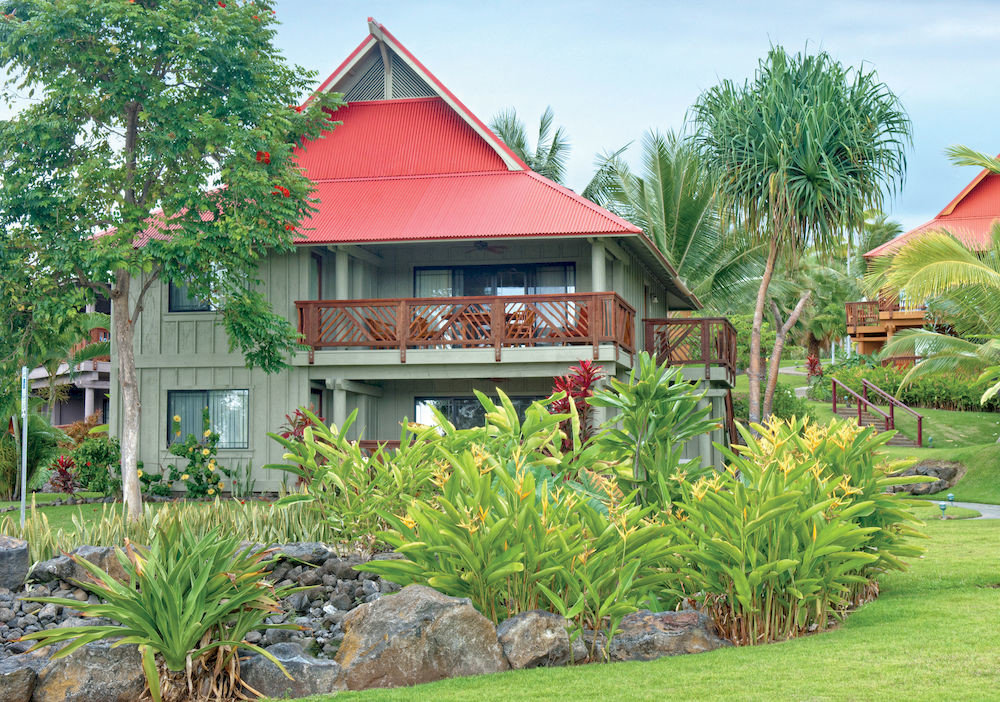 tree grass property Resort house home arecales Garden flower plant backyard lawn