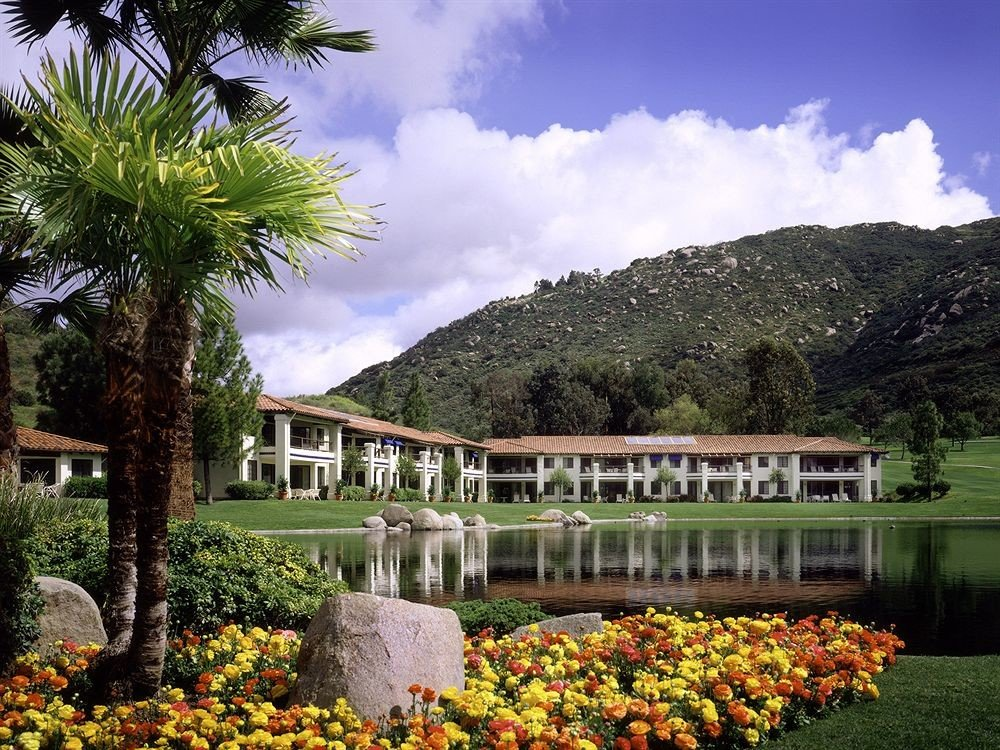 tree grass flower Garden Resort arecales botanical garden plant surrounded