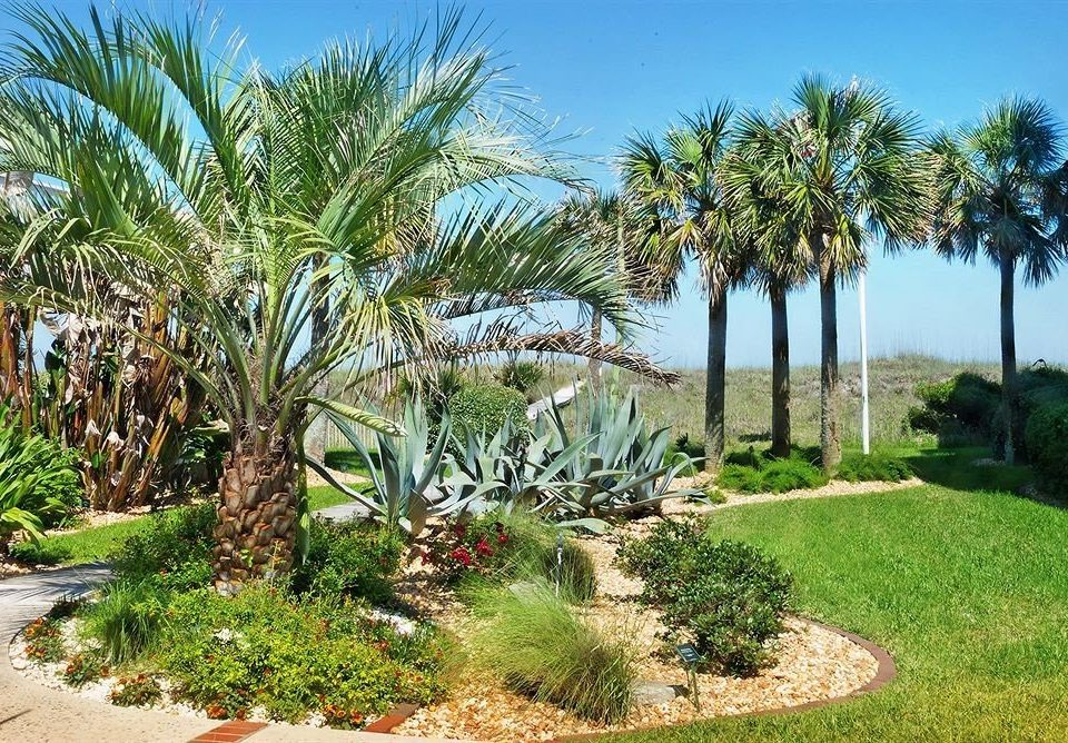 tree sky grass palm property palm family plant botany arecales Resort land plant Garden botanical garden flowering plant lined surrounded