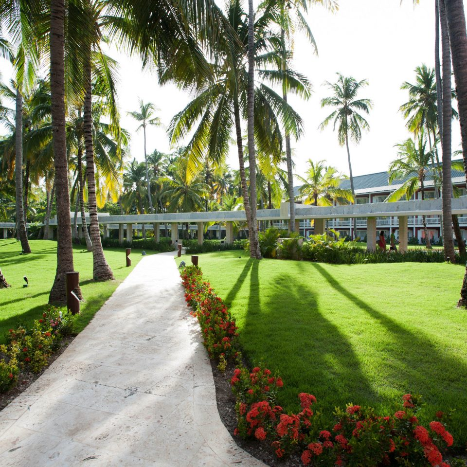 tree grass plant walkway botany palm arecales Resort Garden flower lawn park botanical garden lined lush