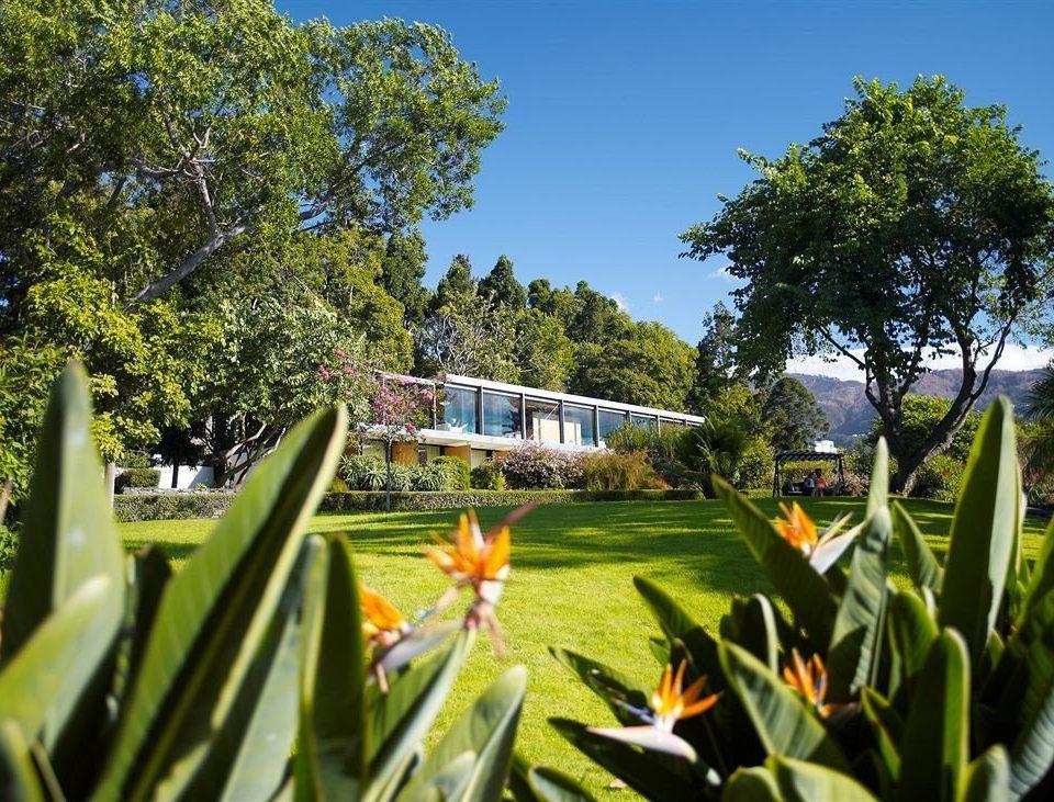 tree sky flora botany grass flower Garden lawn leaf arecales plant park Resort botanical garden tropics