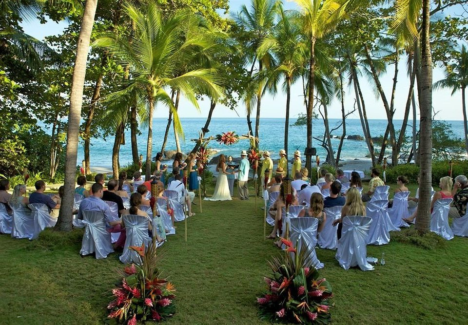 tree grass group botany flower plant ceremony park palm arecales Resort Garden gathered lined
