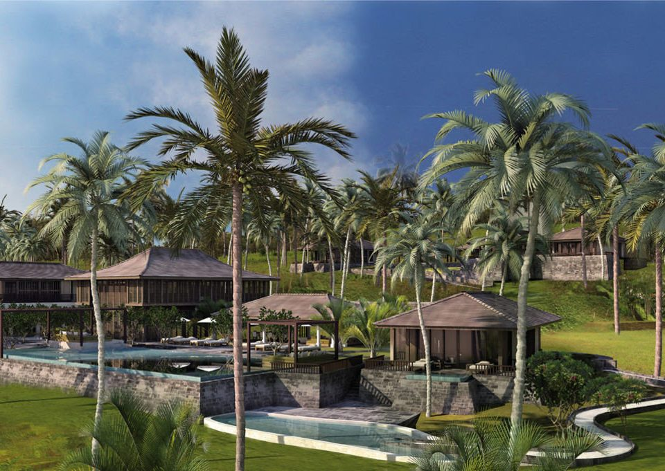 tree grass palm plant Resort botany arecales palm family swimming pool tropics Garden surrounded lush