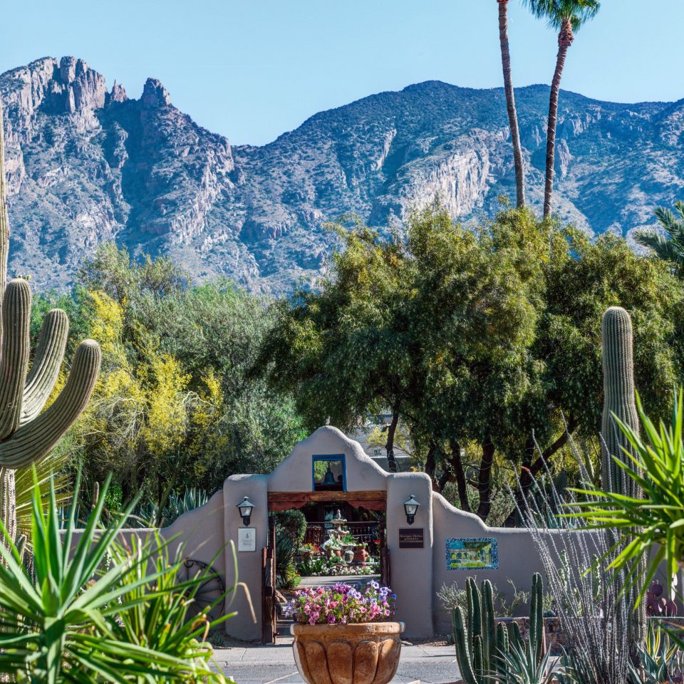 tree sky plant cactus mountain flora botany arecales land plant flower Resort Garden surrounded