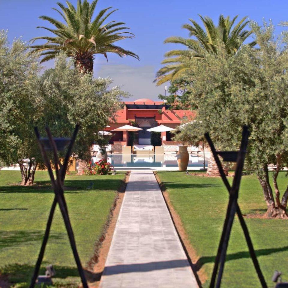 tree grass Resort palm park Garden plant flower arecales