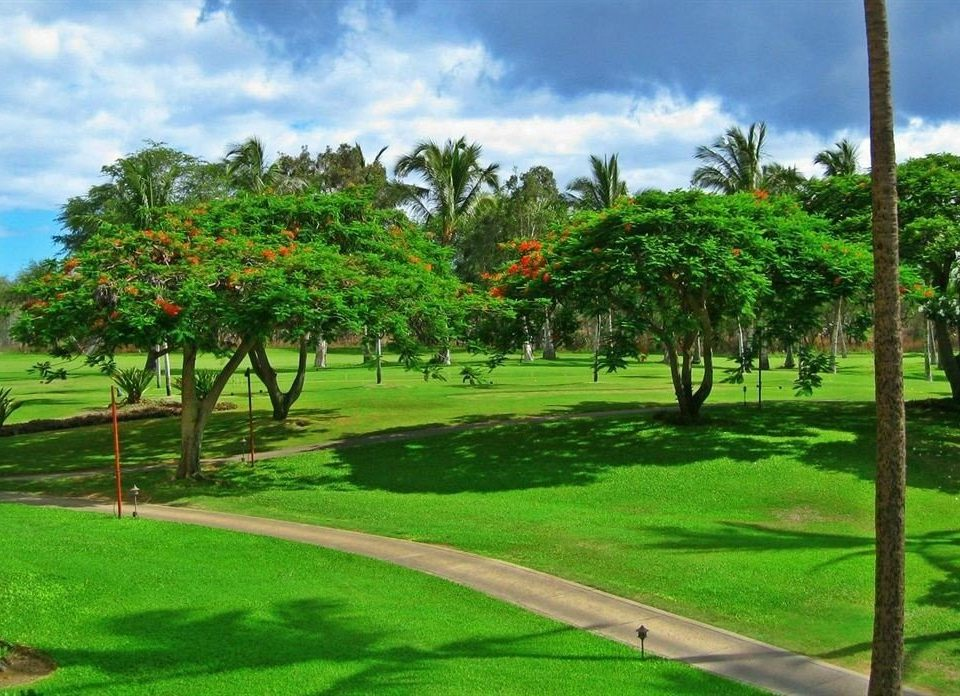 grass sky tree structure lawn sport venue palm golf course arecales golf club Resort residential area plantation Garden plant lush