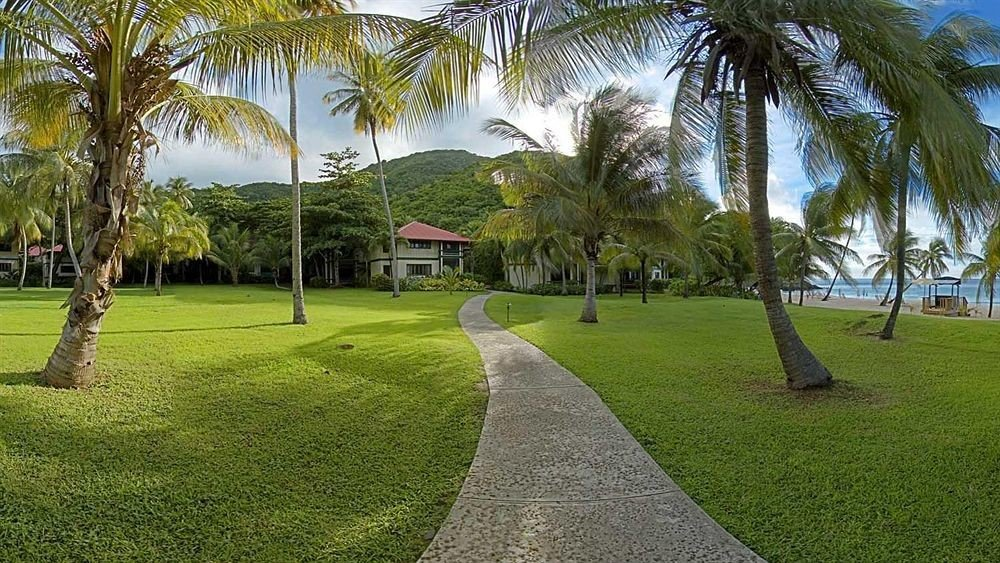 grass tree sky palm plant park lawn arecales Resort walkway palm family grassy Garden lined lush