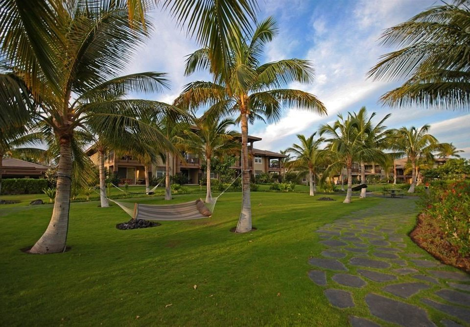 tree grass palm sky plant property Resort arecales palm family walkway lawn Garden