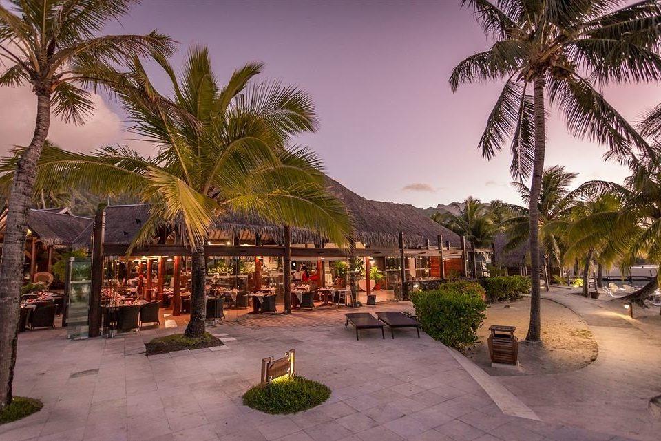 tree palm ground Resort arecales park sidewalk hacienda plant palm family lined Garden stone