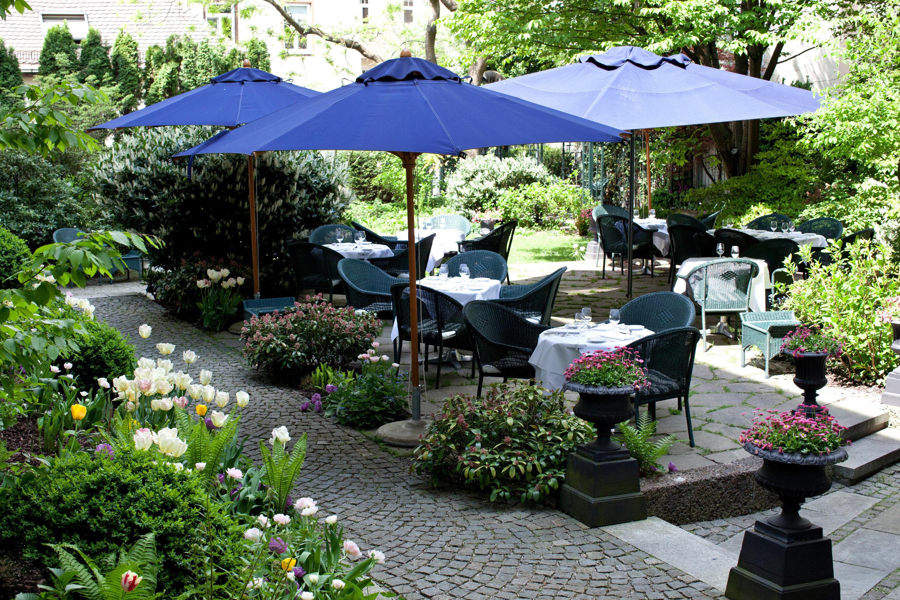 tree umbrella floristry Garden backyard flower lawn outdoor structure yard plant set bushes Resort shade