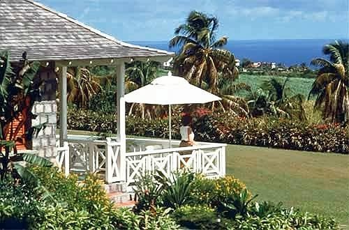 tree umbrella building palm Resort lawn Garden plant shade porch