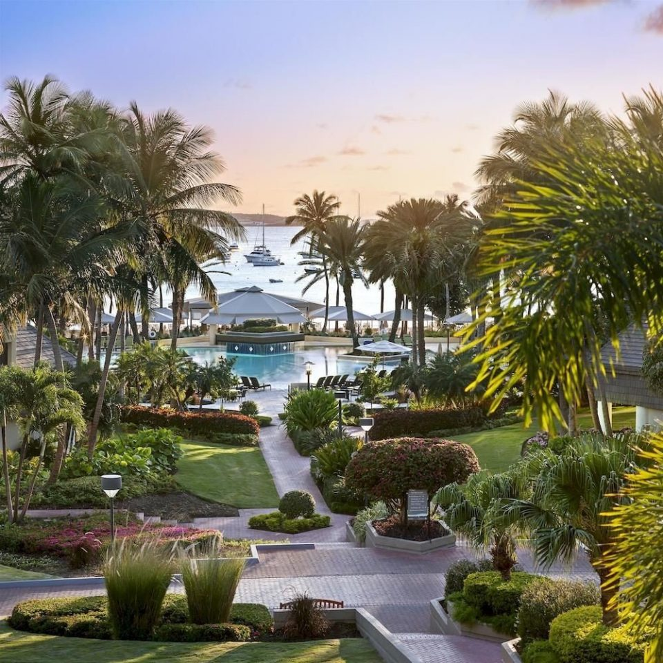 Scenic views tree sky property Resort palm arecales swimming pool landscape Garden palm family plant lined surrounded