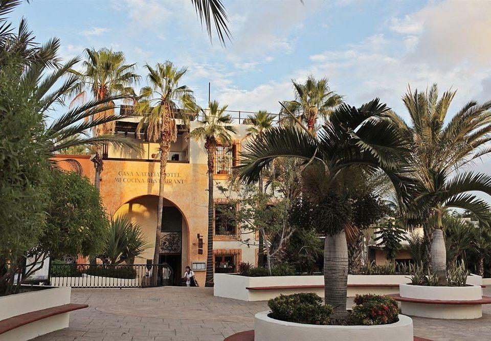 tree sky palm property arecales palm family plant Resort plaza park hacienda Villa stone Garden arch