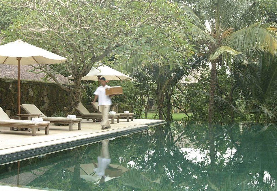 tree swimming pool Resort backyard Villa Garden