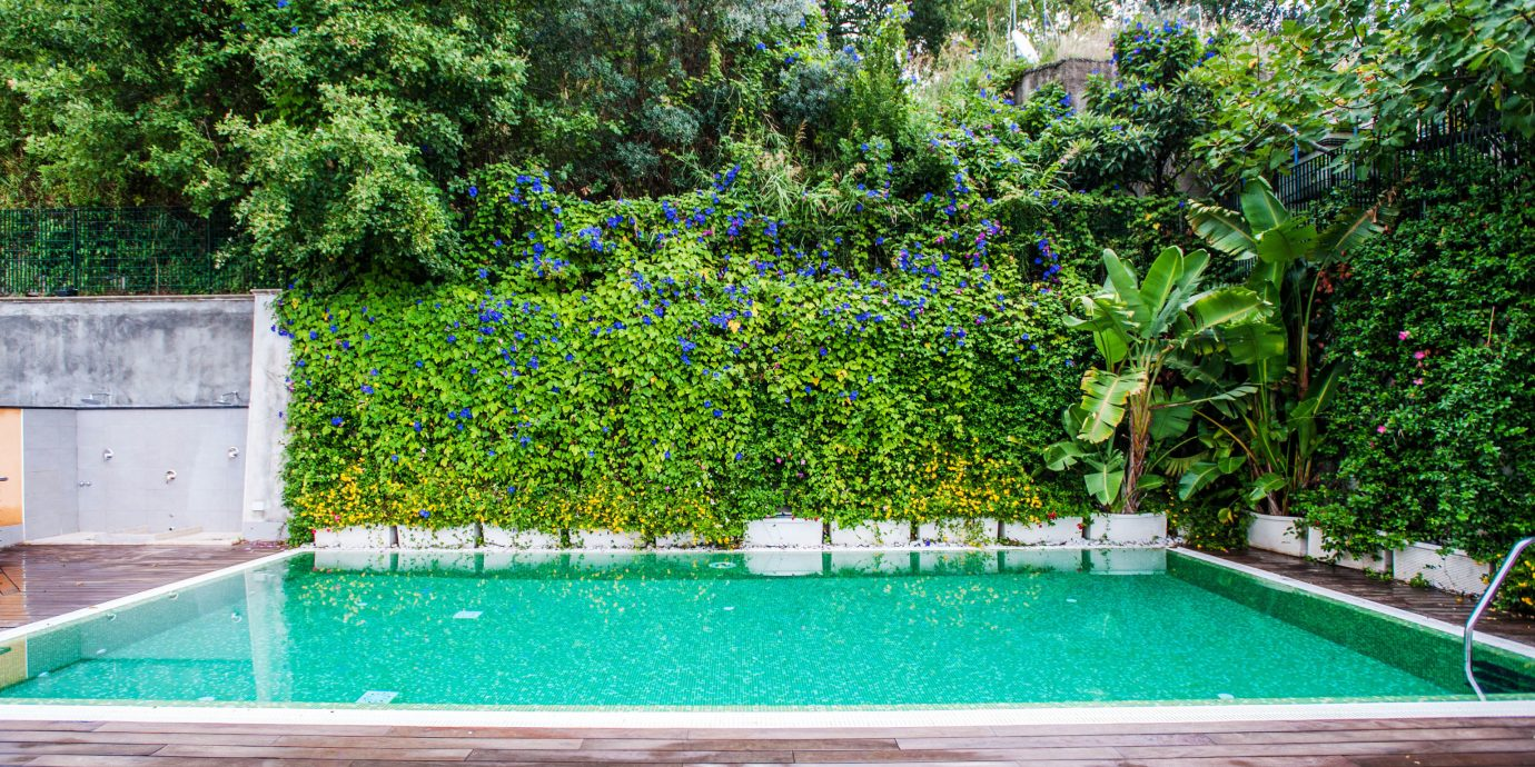 tree swimming pool property backyard Garden reflecting pool green yard landscape architect lawn Villa