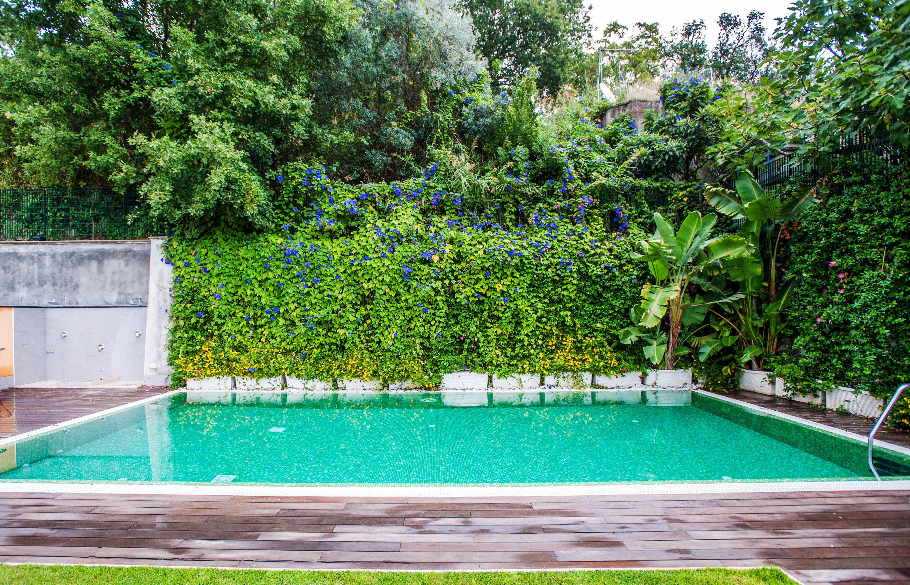tree swimming pool property backyard Garden reflecting pool green yard landscape architect lawn Villa