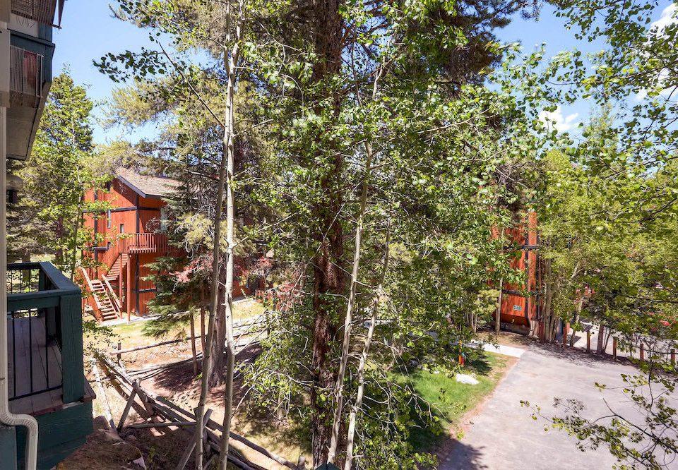 tree flower trail Garden Village cottage yard plant lined