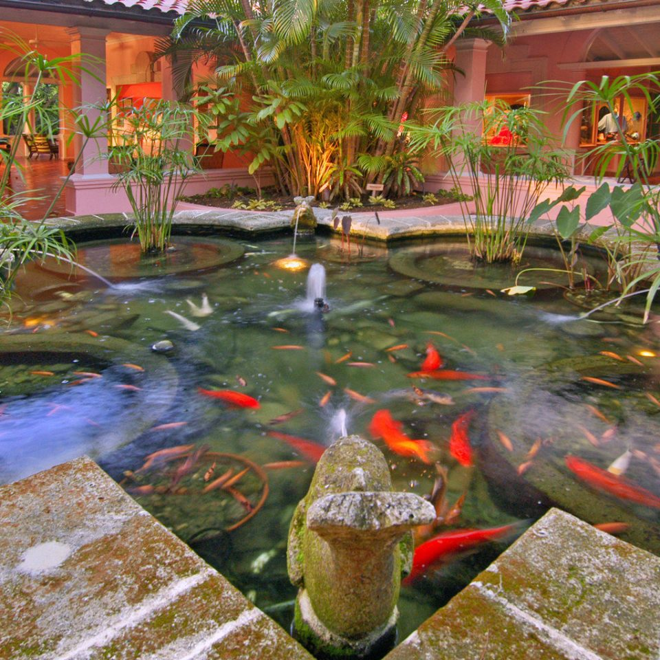 Waterfront Wildlife pond botany fish pond backyard Garden yard flower water feature colorful