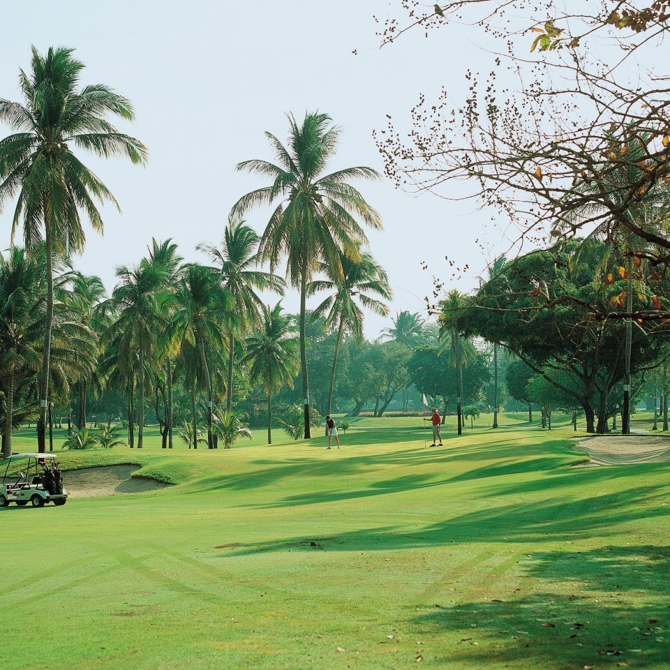 Resort Romantic Tropical grass tree plant structure green palm botany sport venue park arecales golf course outdoor recreation golf club lawn Golf field recreation lush day
