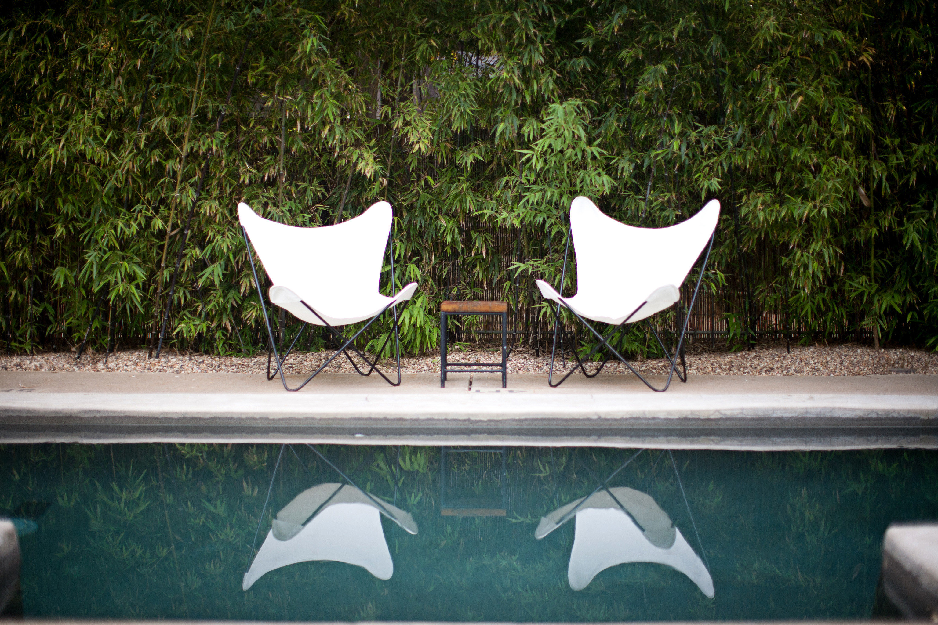 Grounds Hip Hotels Lounge Outdoors Pool tree green leaf art