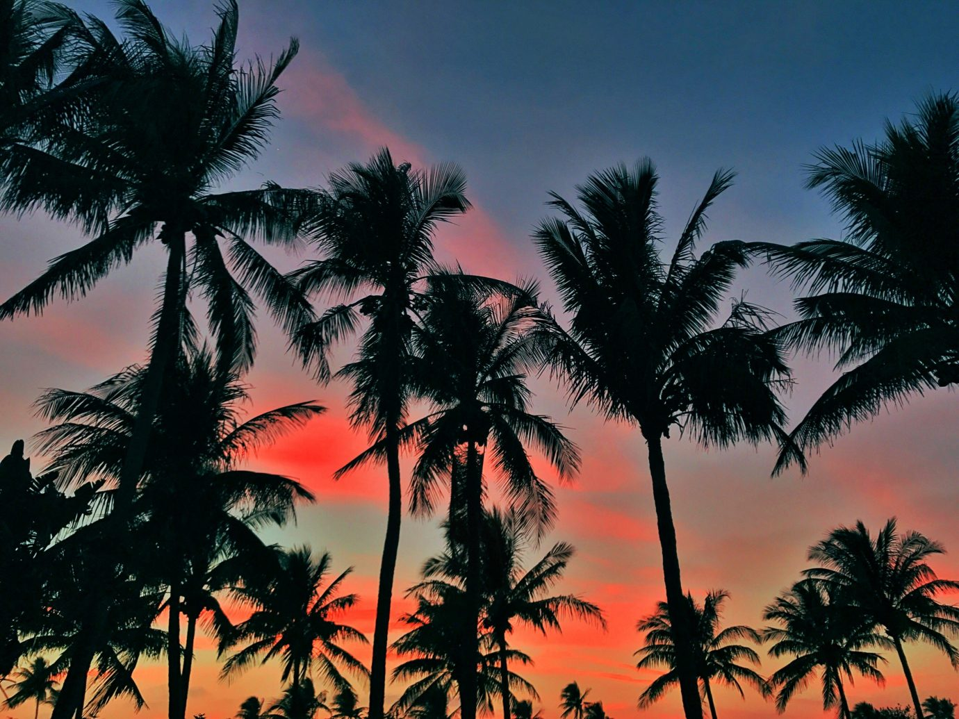 Trip Ideas tree palm plant Sunset sky outdoor palm family setting arecales land plant woody plant tropics savanna dusk sunrise flowering plant dawn field beautiful colorful lined
