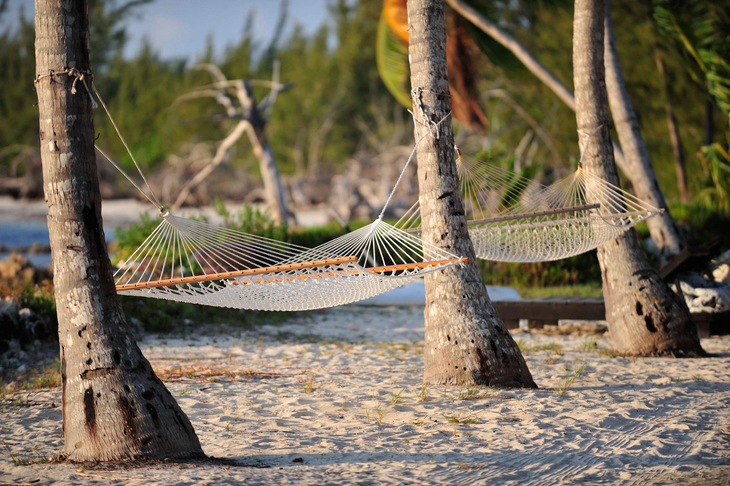 Hotels tree outdoor ground Nature Wildlife hammock bed branch wood Bird plant prop root root
