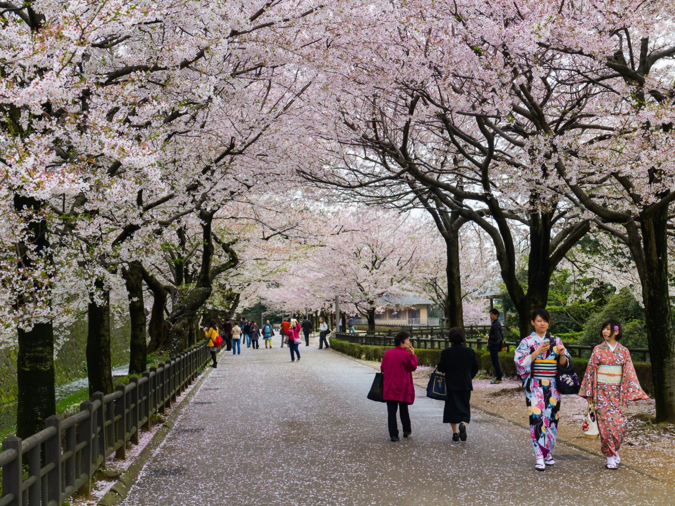Japan Trip Ideas flower plant tree woody plant cherry blossom blossom spring recreation leisure walking tourism Winter City branch trail autumn park sky