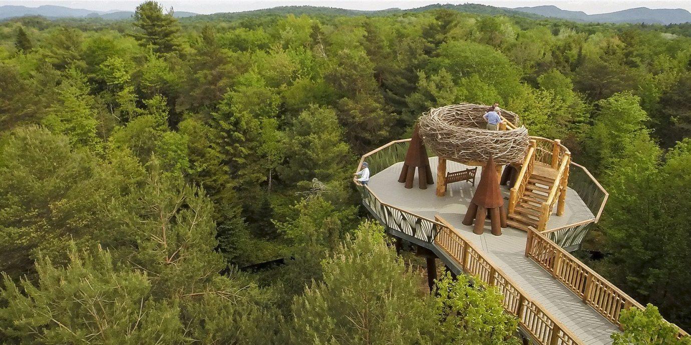 Trip Ideas tree outdoor grass wilderness mountain Forest mountain range trail Adventure bridge rainforest