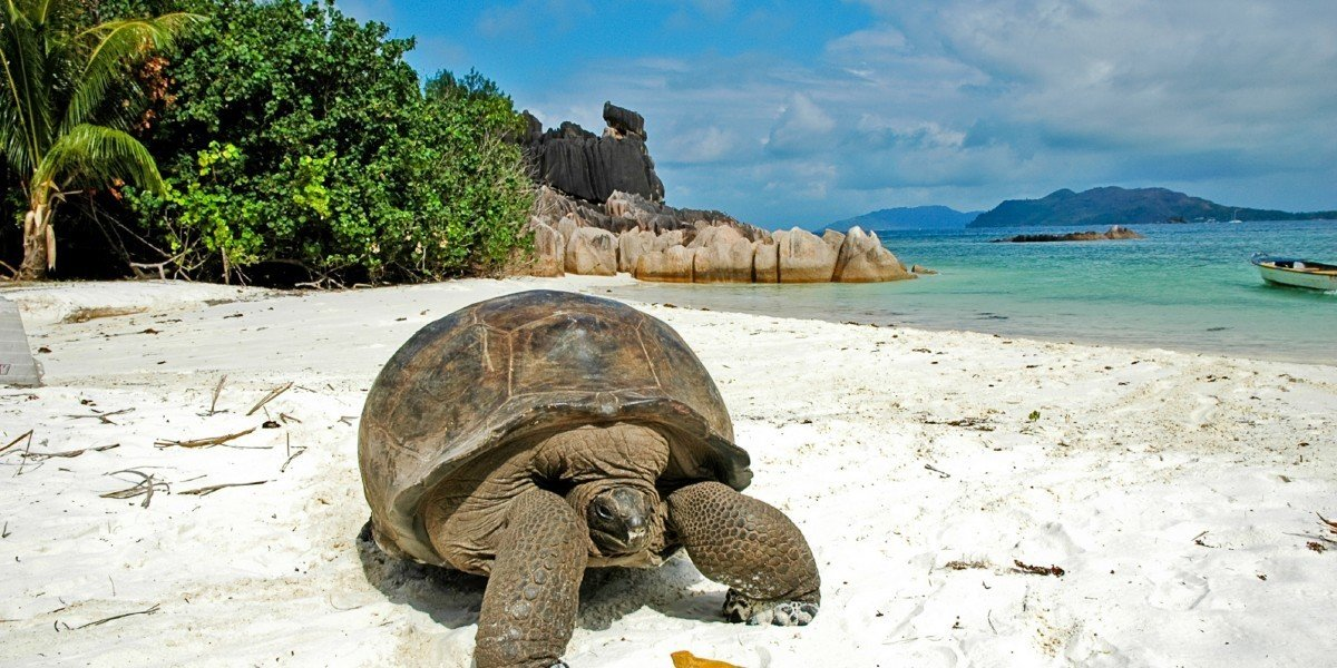 Trip Ideas turtle outdoor reptile sky ground animal fauna Wildlife Sea sandy