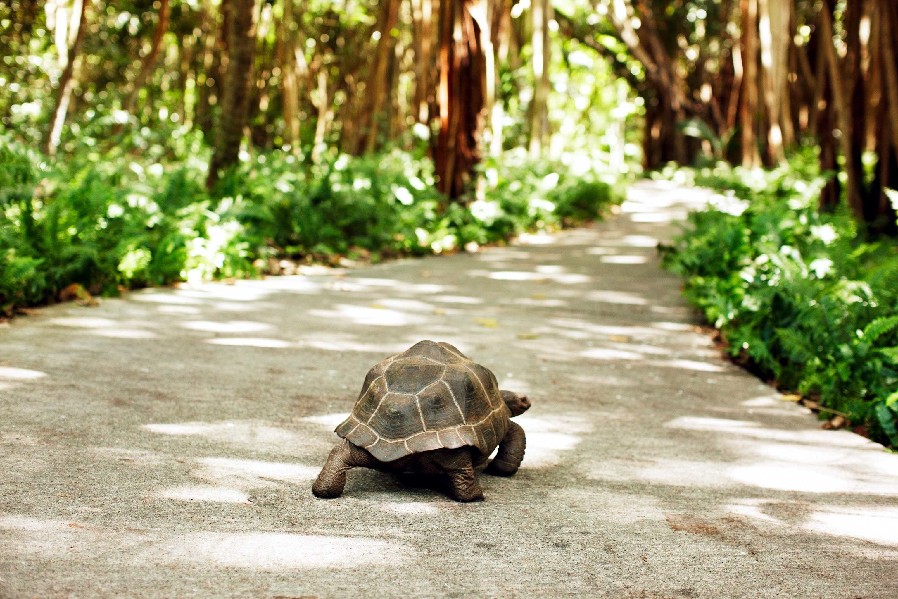 Hotels Jungle Outdoors reptile tree animal turtle ground green tortoise lawn curb